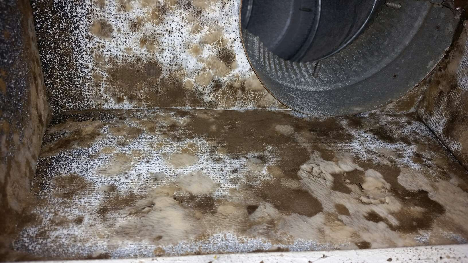 How to Identify Black Mold