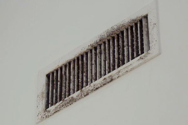 Black Mold Quality Air Duct Cleaning Services In Greater